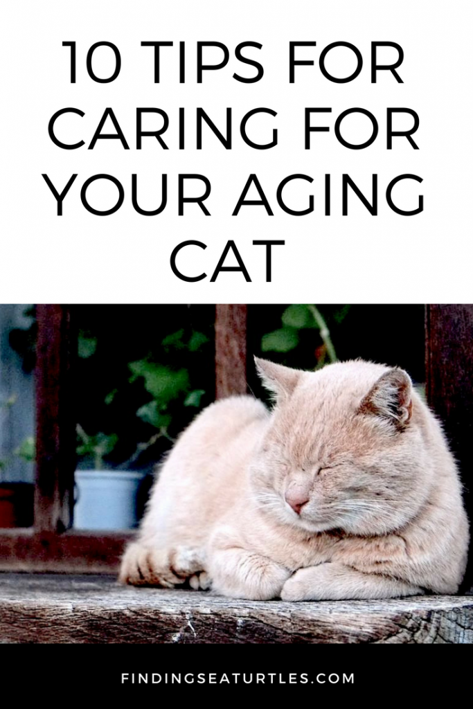 10 Ingenious Ways to Help Your Aging Cat TODAY