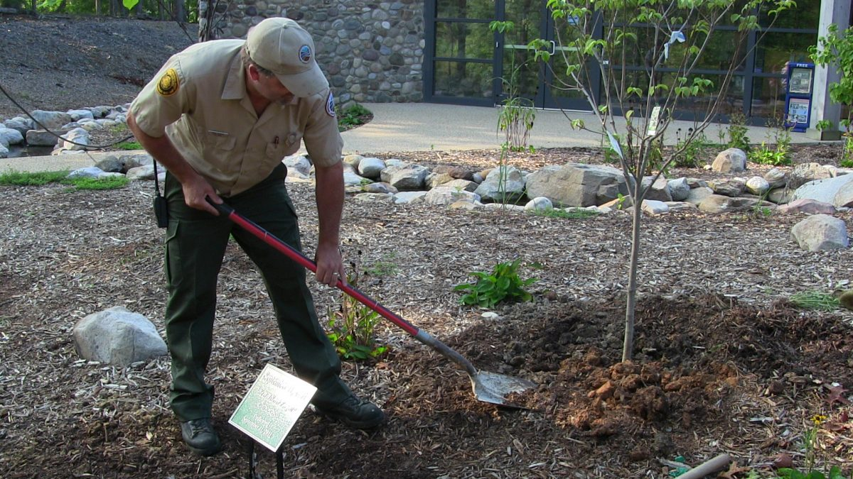 How to Plant a Tree: What to Consider When Selecting a Site