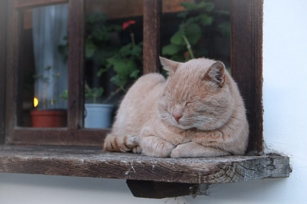 10 Ingenious Ways to Help Your Aging Cat TODAY #CatHealth #CatWellness #HealthyCat #cats