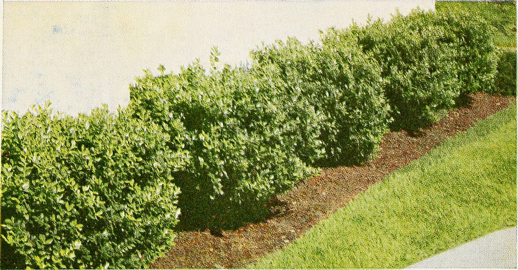 How to Save Money When Shopping for Shrubs