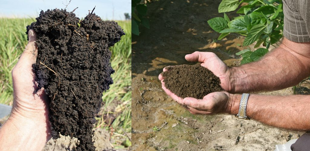 12 Incredible Soil Conditioners Improve Garden Soil Structure #Compost #CompostManure #GreenGardening #GardenSoil #TopSoil