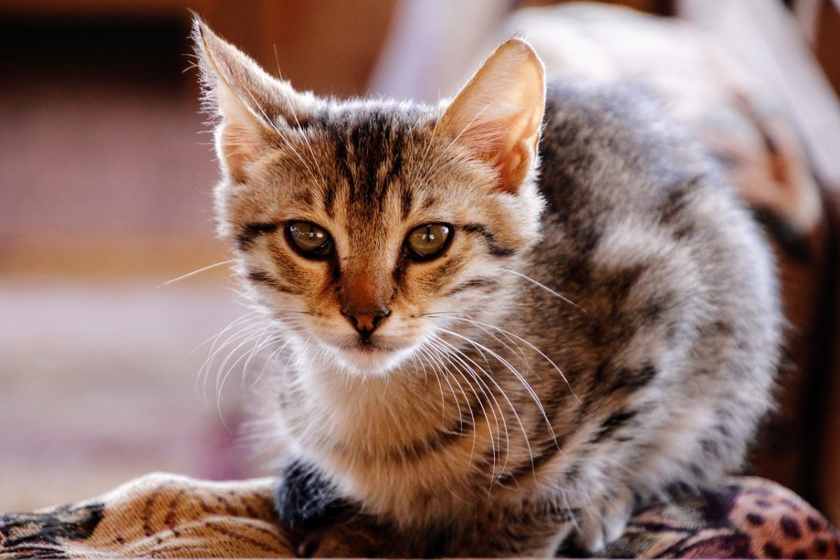 12 Toxic & Dangerous Household Items to Protect Your Cat From