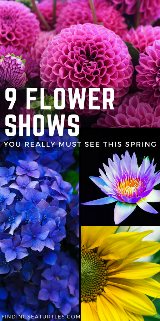 9 Stunning Flower Shows to See In March 2018! #flowershow #gardening #flowers