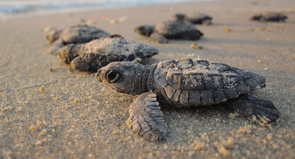 20 Tips For Responsibly Watching Sea Turtles Nesting