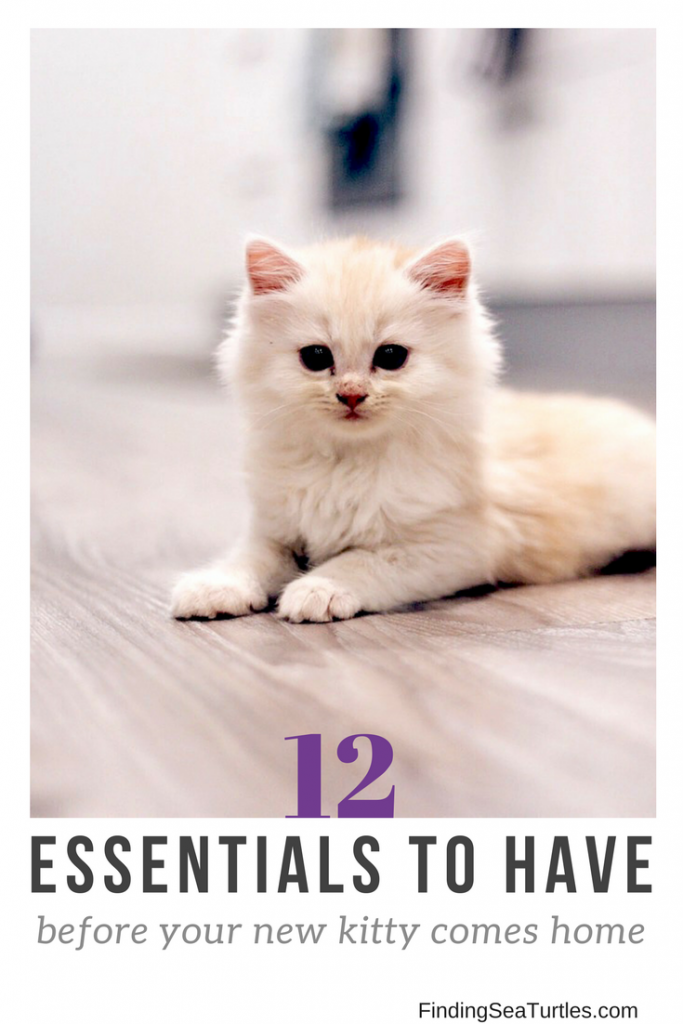 First Time Cat Owner: 12 Essentials #cat #kitty #kittycat