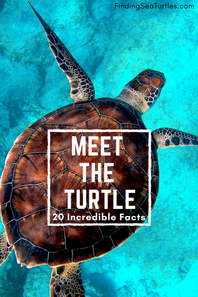 20 Incredible Facts You Didn't Know About Our Beloved Turtle