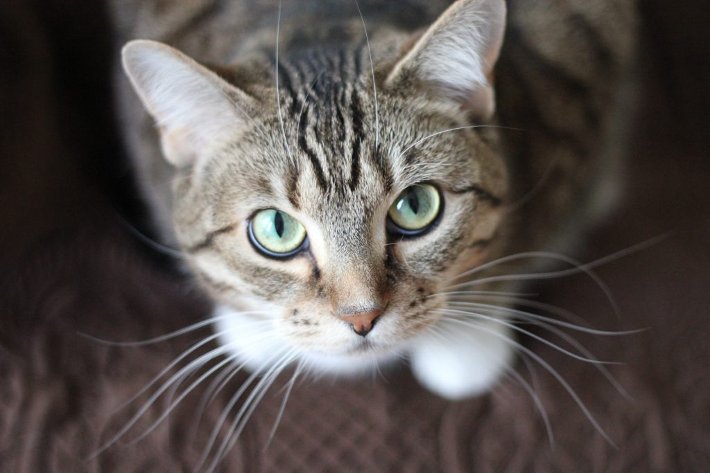 First Time Cat Owner 12 Essentials #CatCare #NewCat #CatAccessories #Cats #CatSupplies