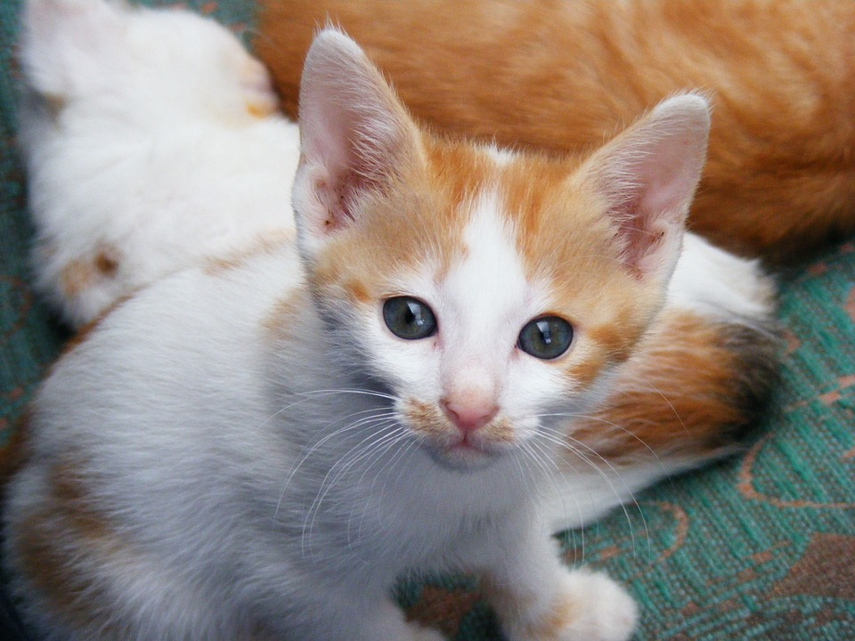 First Time Cat Owner 12 Essentials #NewCat #NewKitten #CatCare #NewCatHome #Cats