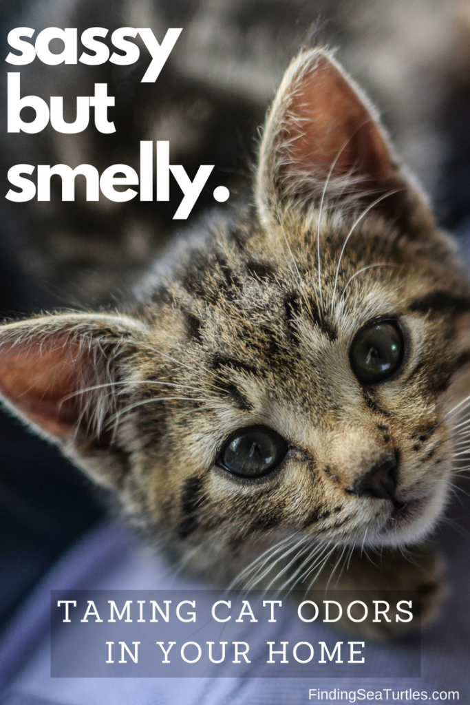 First Time Cat Owner: Cleaning + Odor Elimination Tips #cat #cleaning