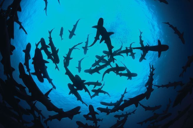 10 Cool Ways to Let Some Shark! Into Your Home - Cocos Island #sharkweek #coastaldecor #diving #travel #beachhouse