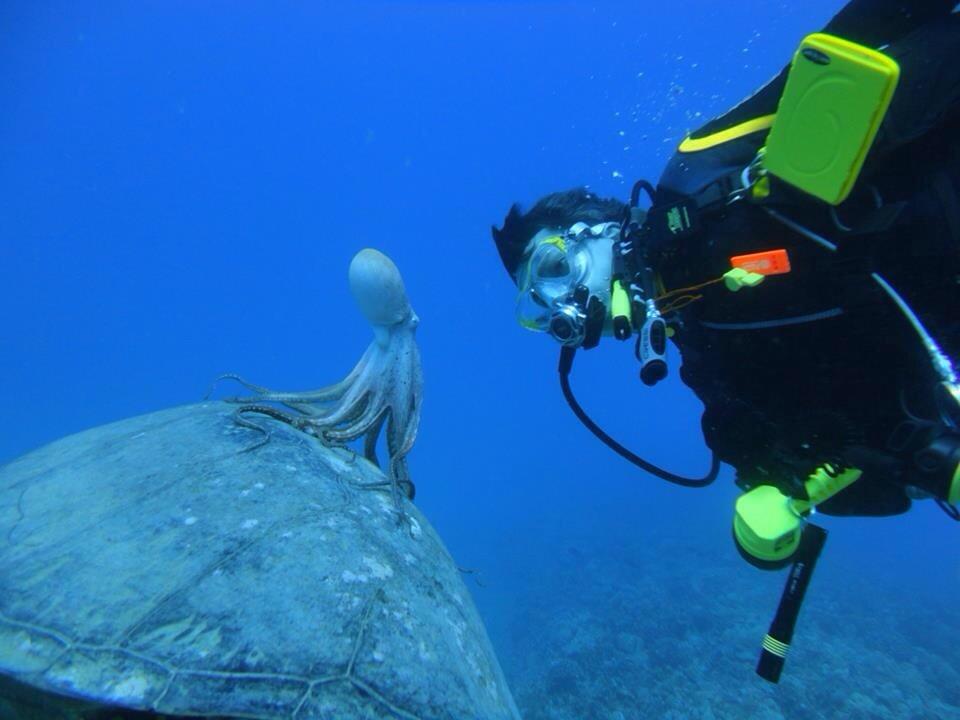 Sealife Spotlight: 20 Octopus Facts - Octopus hitching ride on sea turtle #octopus #sealife #oceanlife