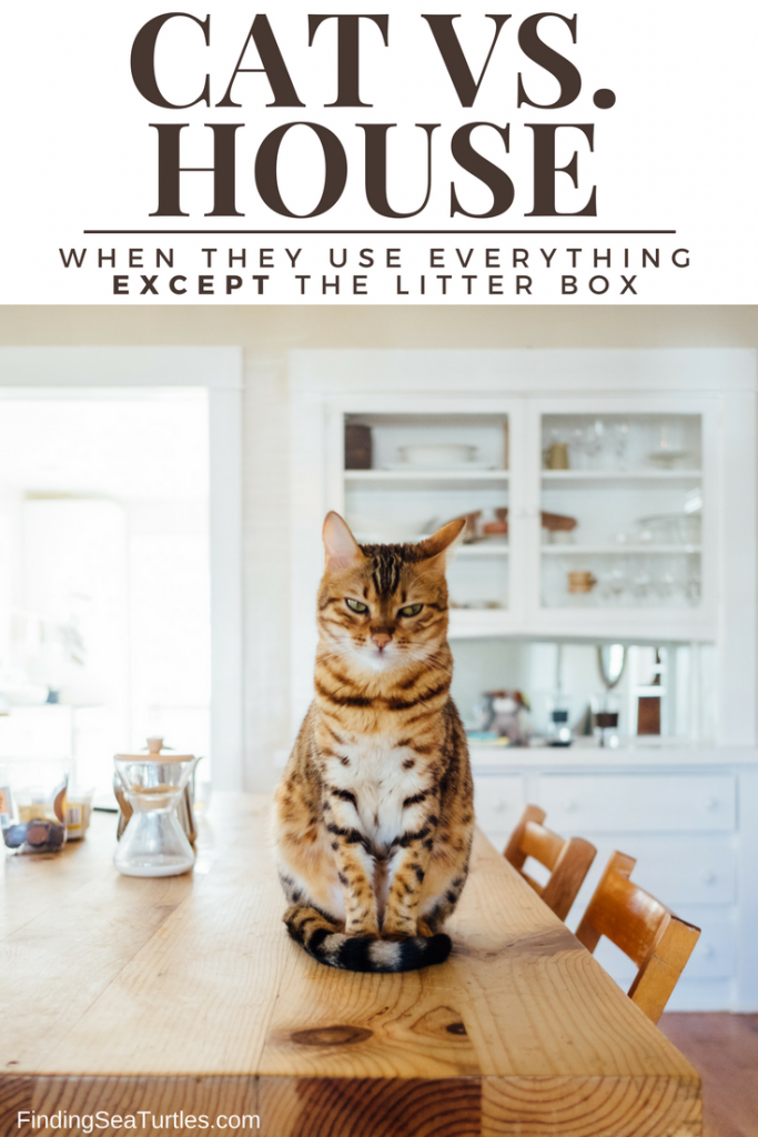 Cat: House-soiling Preventative Tips #cleaning #cat