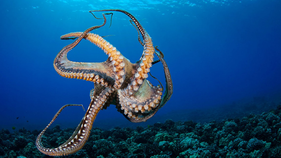 Sealife Spotlight: 20 Octopus Facts You Didn't Know