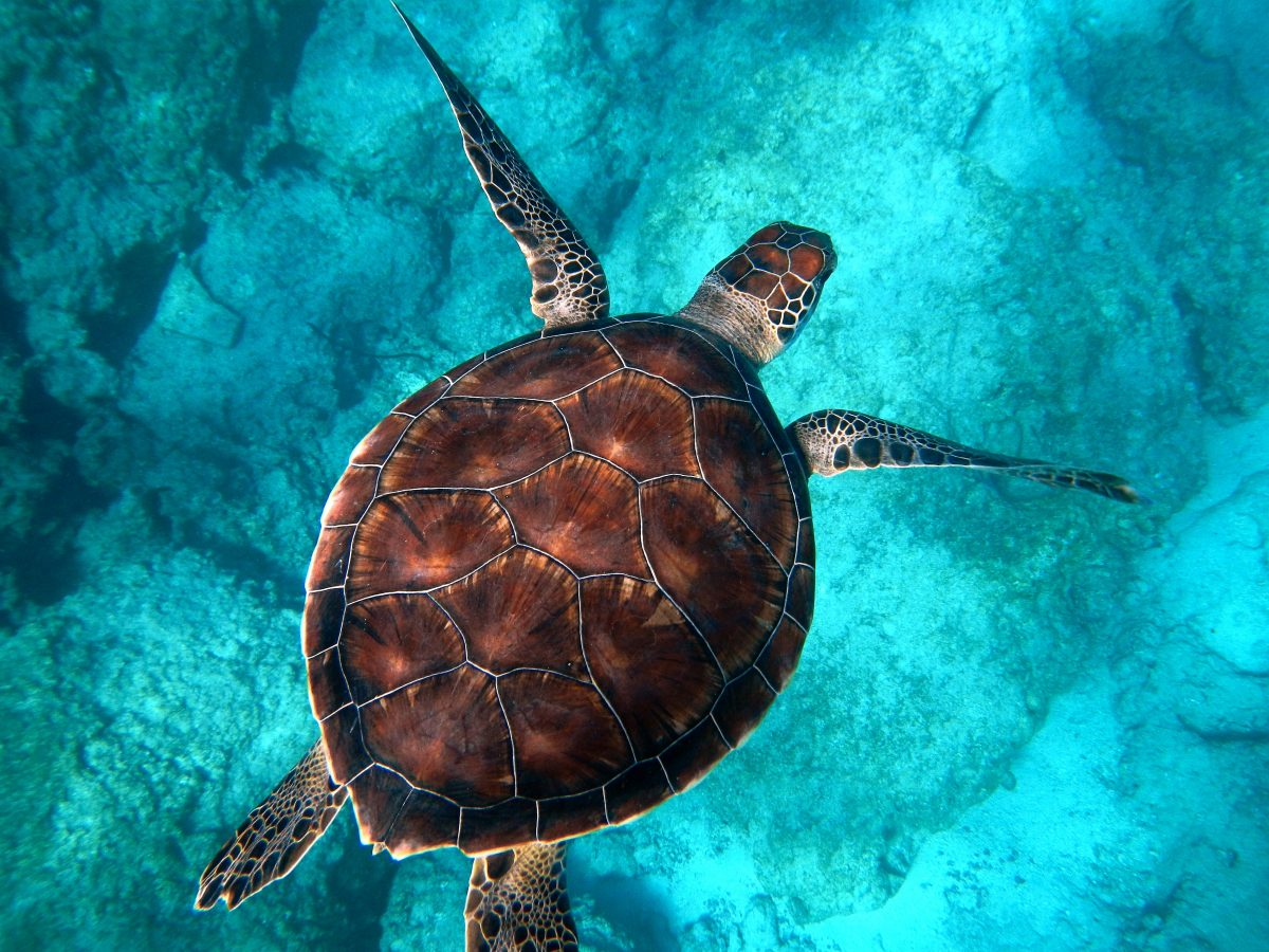 20 Incredible Facts You Didn't Know About Turtles