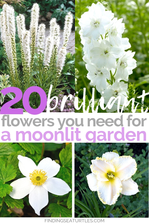 20 Plants To Create A Moonlit Garden #MoonlightGarden #Gardening #Landscape #CurbAppeal #MoneySaving #DIY