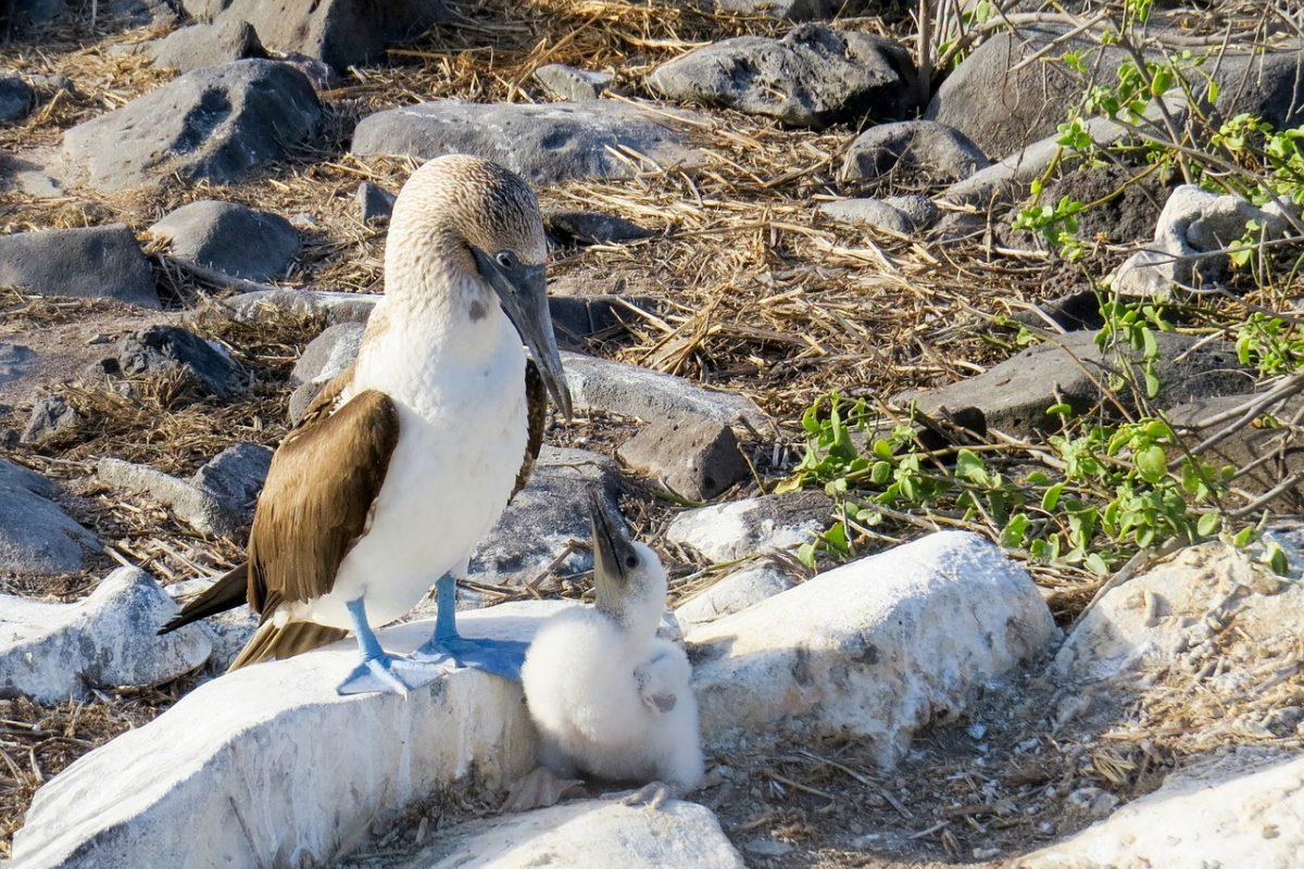 Galápagos Islands, Ecuador: Coastal Communities We'd Love to Visit