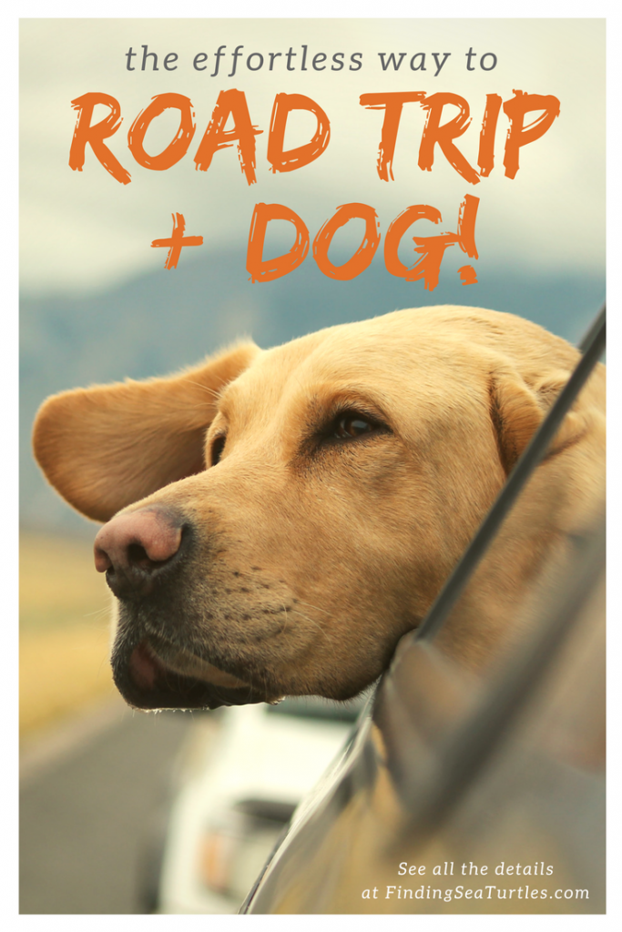 First Time Dog Owner: Road Trip Tips #dog #roadtrip #pettravel