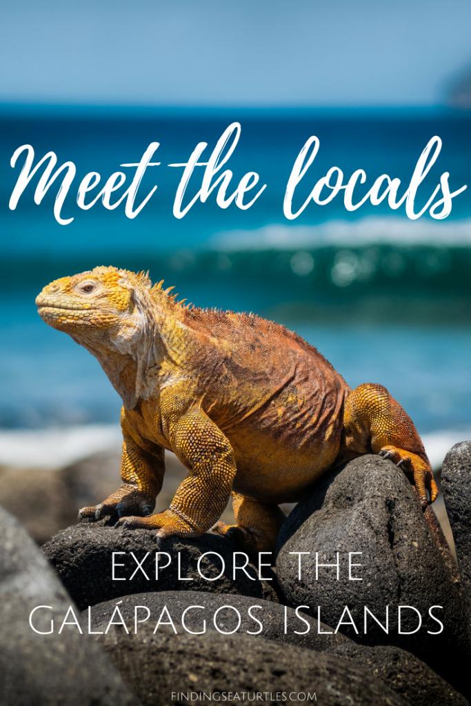 Galápagos Islands, Ecuador Coastal Communities We'd Love to Visit #GalapagosIslands #Ecuador #CostalCommunities #Iguana #Beaches #Snorkeling