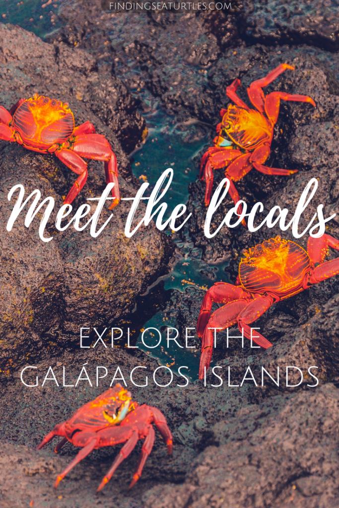 Galápagos Islands, Ecuador Coastal Communities We'd Love to Visit #GalapagosIslands #Ecuador #CostalCommunities #Crabs #Beaches #Snorkeling