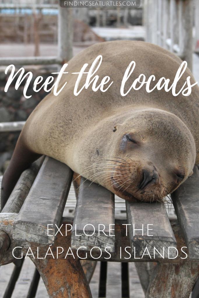 Galápagos Islands, Ecuador Coastal Communities We'd Love to Visit #GalapagosIslands #Ecuador #CostalCommunities #SeaLion #Beaches #Snorkeling