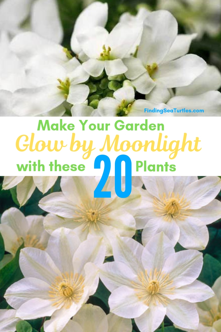 Make Your Garden Glow By Moonlight With These 20 Plants #Garden #Gardening #Landscaping #Moonlight #MoonlightGarden #Perennials #MoonlightGardenPerennials