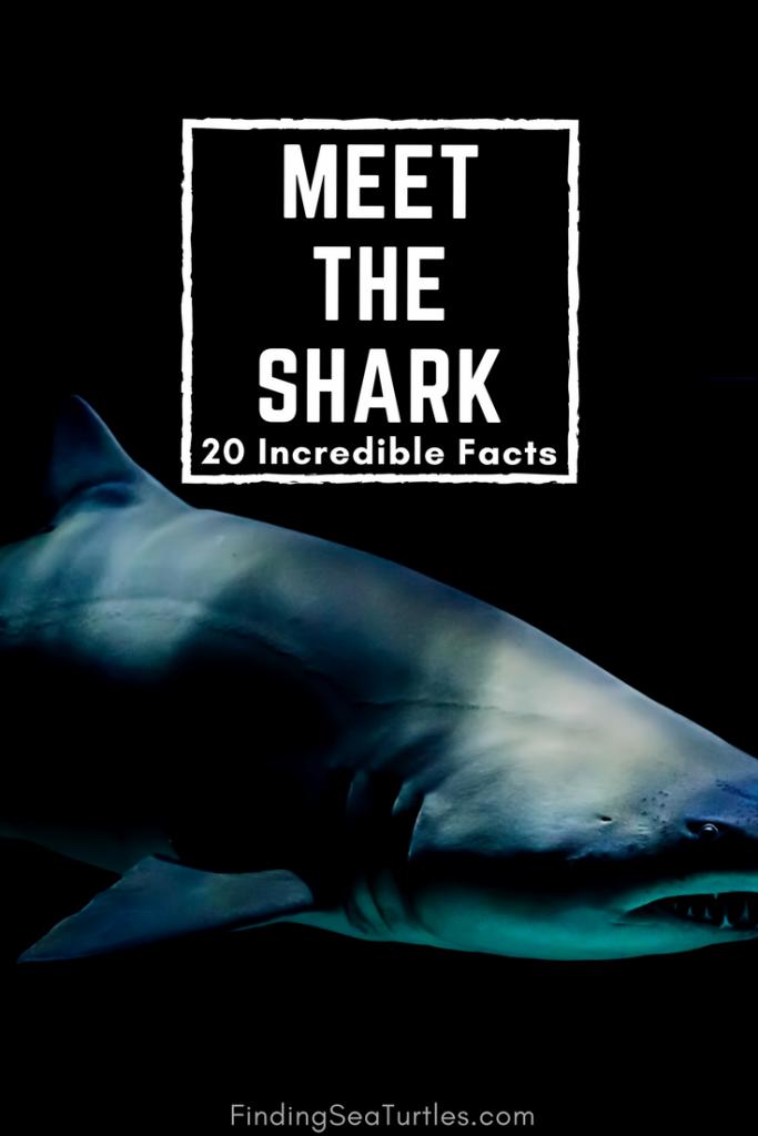 Sealife Spotlight: 20 Shark Facts you Didn't Know #sharkweek #shark #sealife #funfacts #jaws