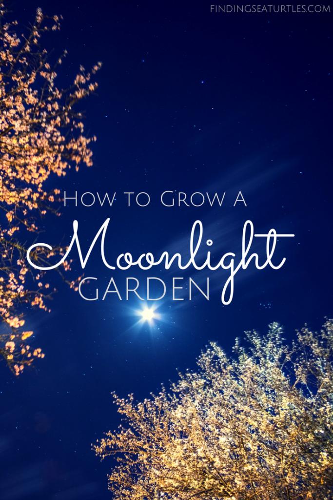 Brighten Your Summer Garden With Moonlight #MoonlightGarden #Gardening #Landscape #CurbAppeal #MoneySaving #DIY