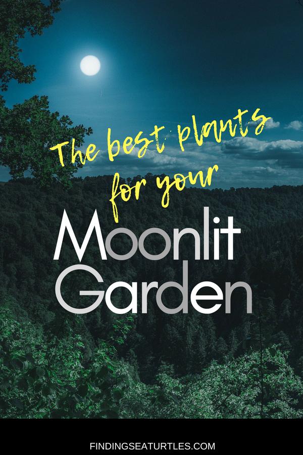 Best Plants for your Moonlit Garden #MoonlightGarden #Gardening #Landscape #CurbAppeal #MoneySaving #DIY
