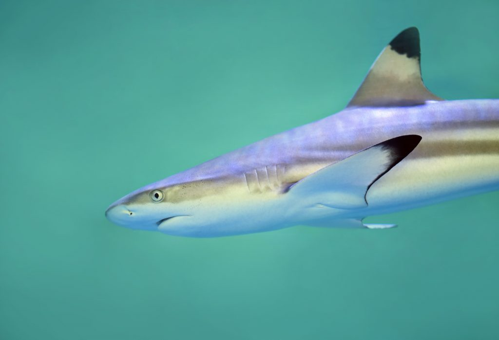 Sealife Spotlight: 20 Shark Facts You Didn't Know #sharkweek #shark #funfacts #sealife
