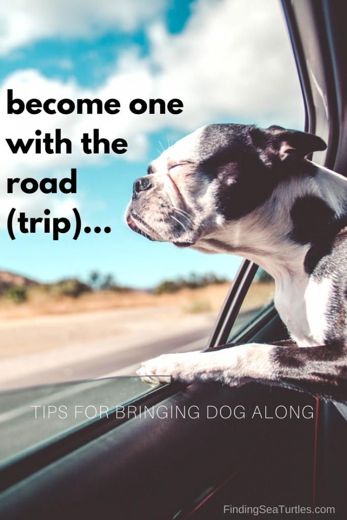 First Time Dog Owner: Road Trip Tips #dog #cartravel #roadtrip
