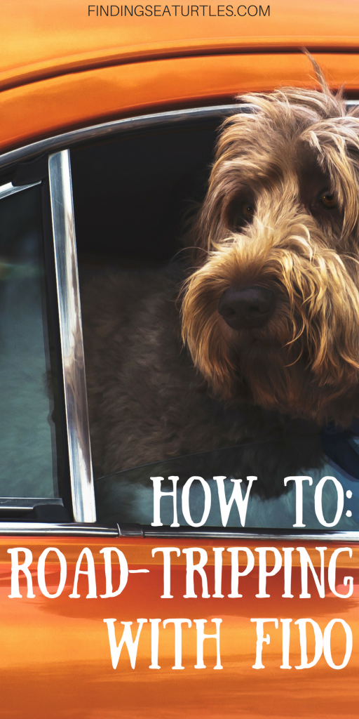 First Time Dog Owner:  Road Trip Tips #dog #cartravel #roadtrip