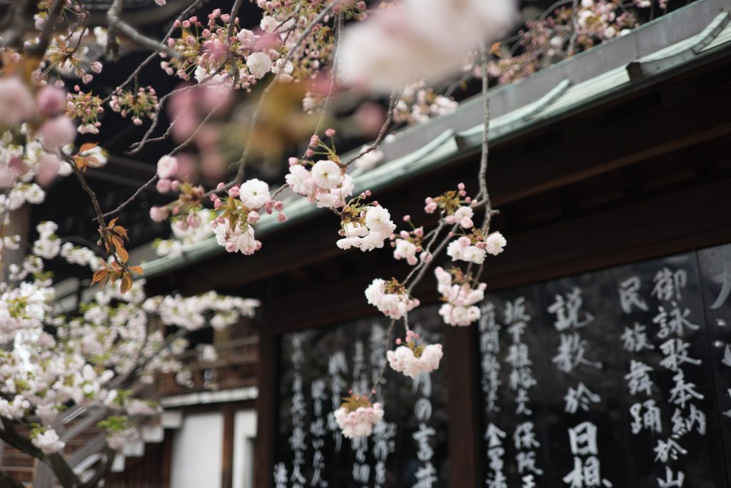 Cherry Blossoms: 15 Best Viewing Places Around the US #cherryblossoms #cherryblossomfestival #japanesecherrytree #japanesecherryblossom