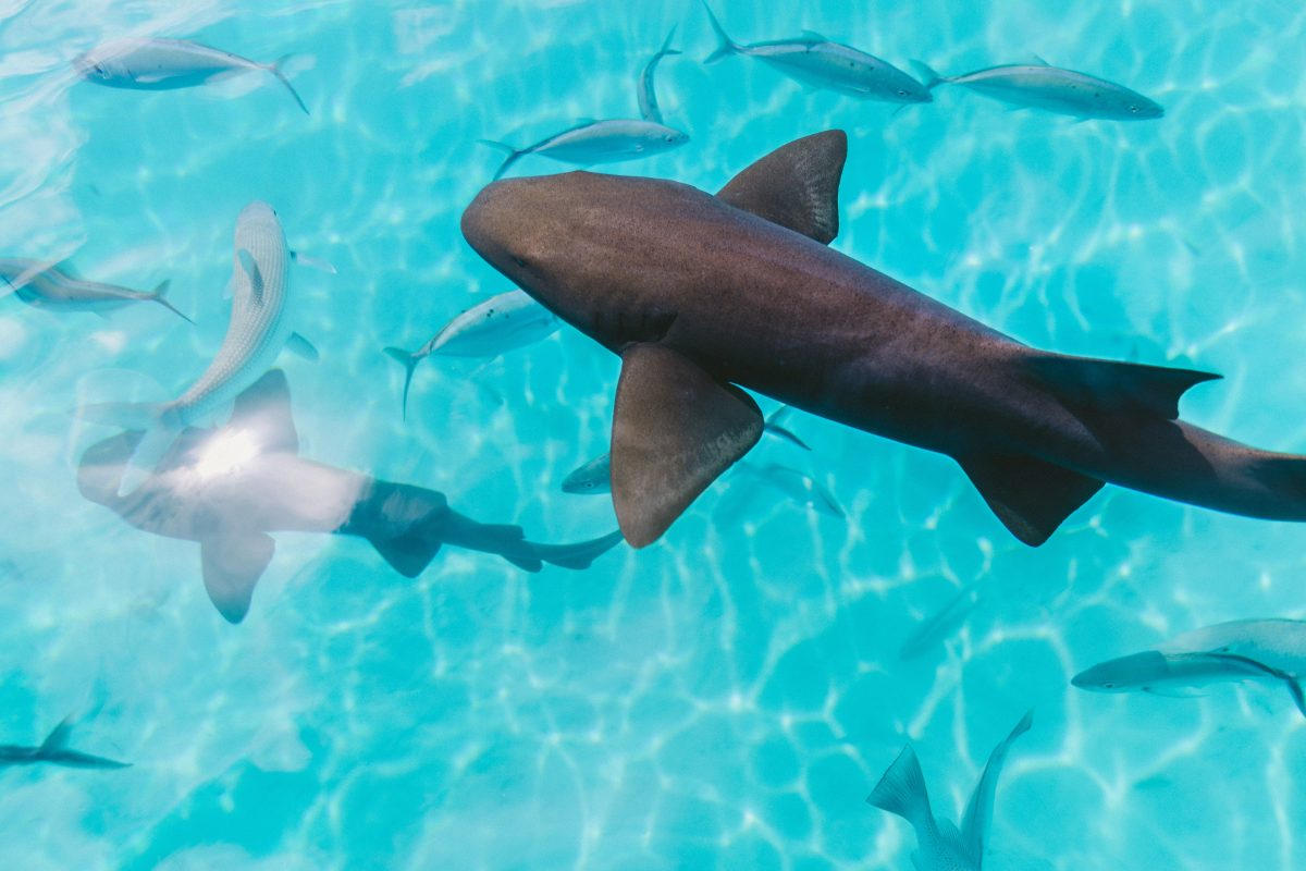 Sealife Spotlight: 20 Shark Facts you Didn't Know