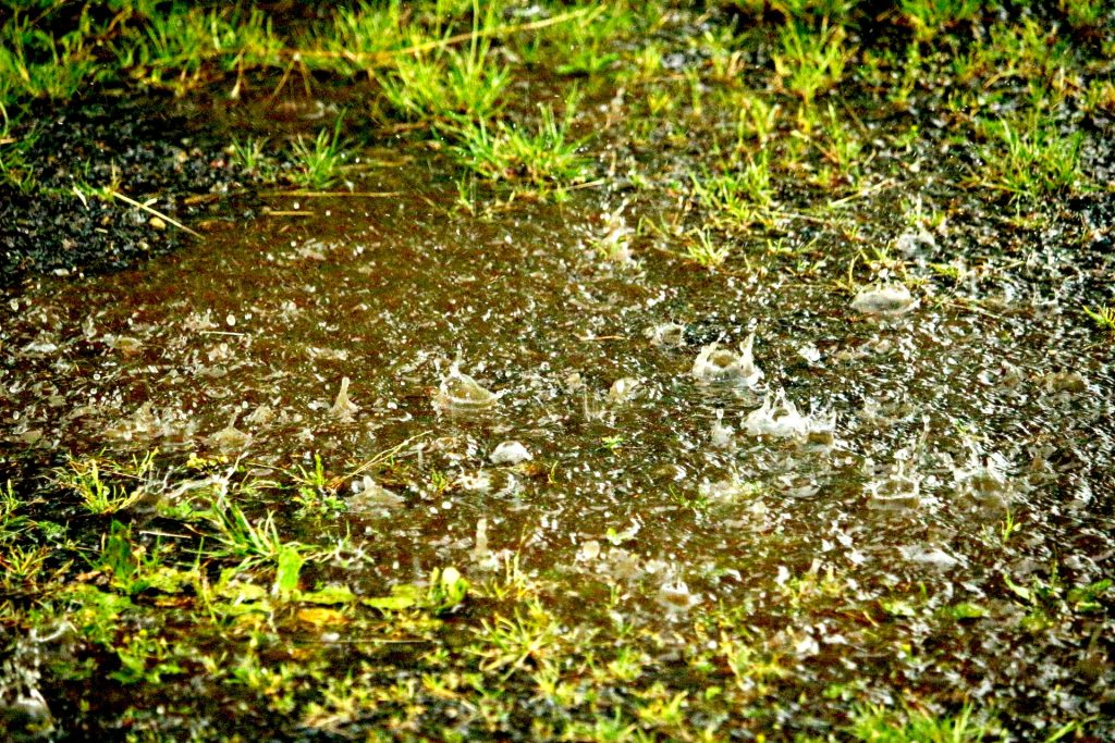 Lawn Drainage Problems? Amazing Gypsum Additive May Help #gardeningtips #gardeninghacks #lawncare