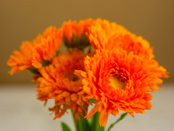 21 Gorgeous Garden Plants to Grow From Seeds Orange King Calendula #Gardening #DIY #DIYGardening #Landscape #SeedGardening