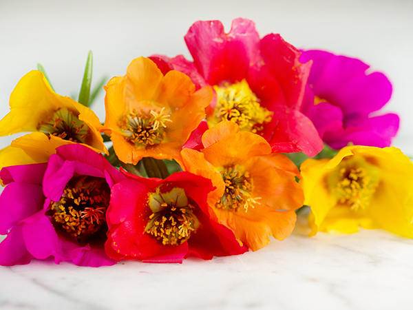 21 Gorgeous Garden Plants to Grow From Seeds Portulaca Moss Rose Single #Gardening #DIY #DIYGardening #Landscape #Frugal