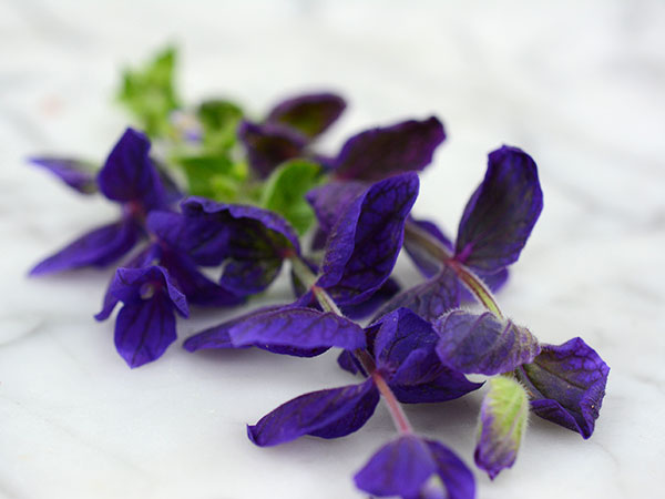 21 Gorgeous Garden Plants to Grow From Seeds Salvia Blue Monday Sage #Gardening #DIY #DIYGardening #Landscape #Frugal