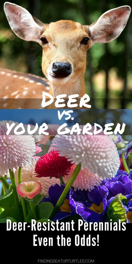 Deer Resistant Perennials: Stop Planting An All You Can Eat Garden Buffet #OrganicGardening #Gardening #Organic #DeerResistant #WhiteFlowerFarm
