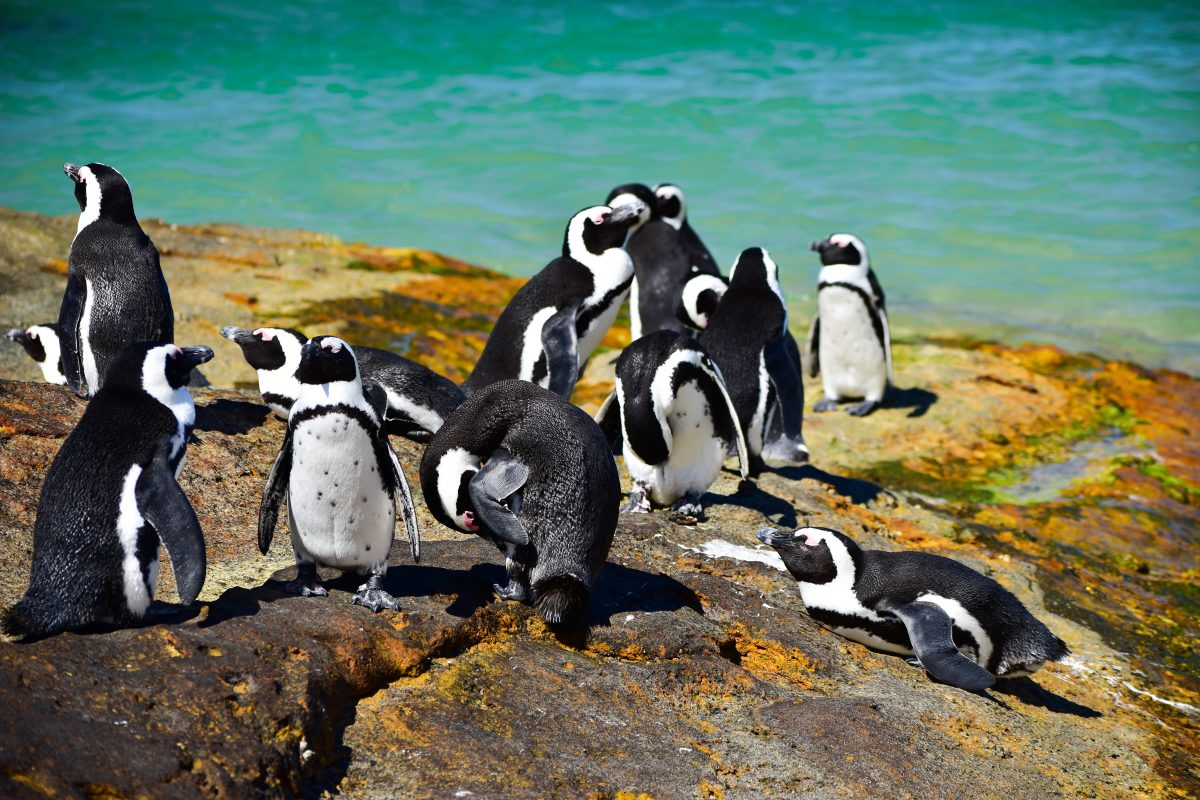 Sealife Spotlight: 40 Penguin Facts You Didn't Know