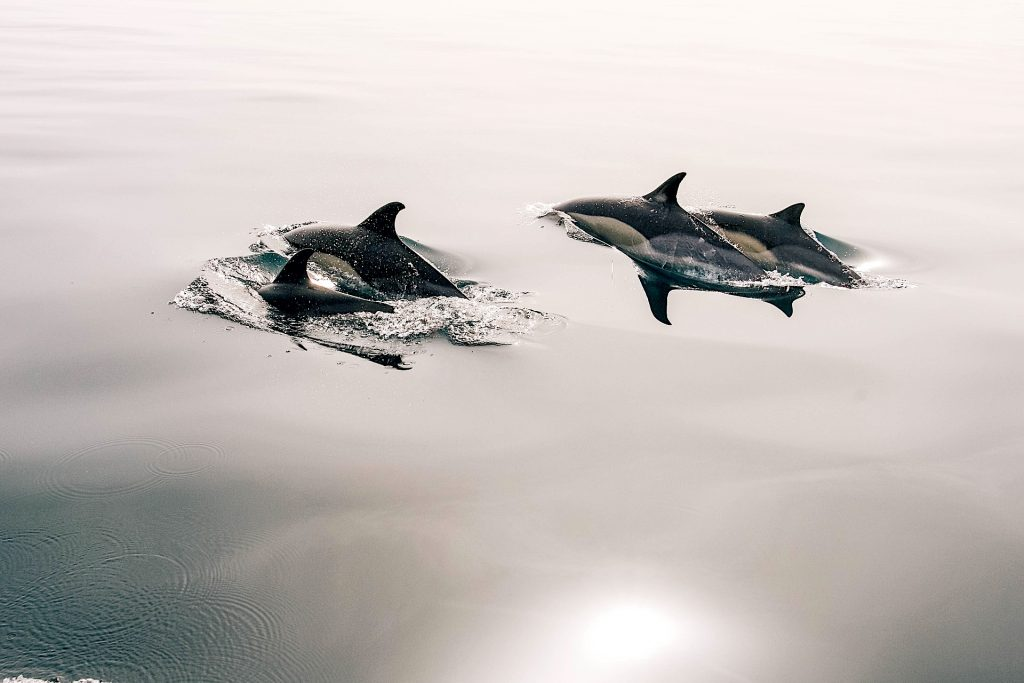 Sealife Spotlight: 38 Dolphin Facts You Didn't Know #WorldDolphinDay #dolphins #sealife #MarineMammals #oceanlife