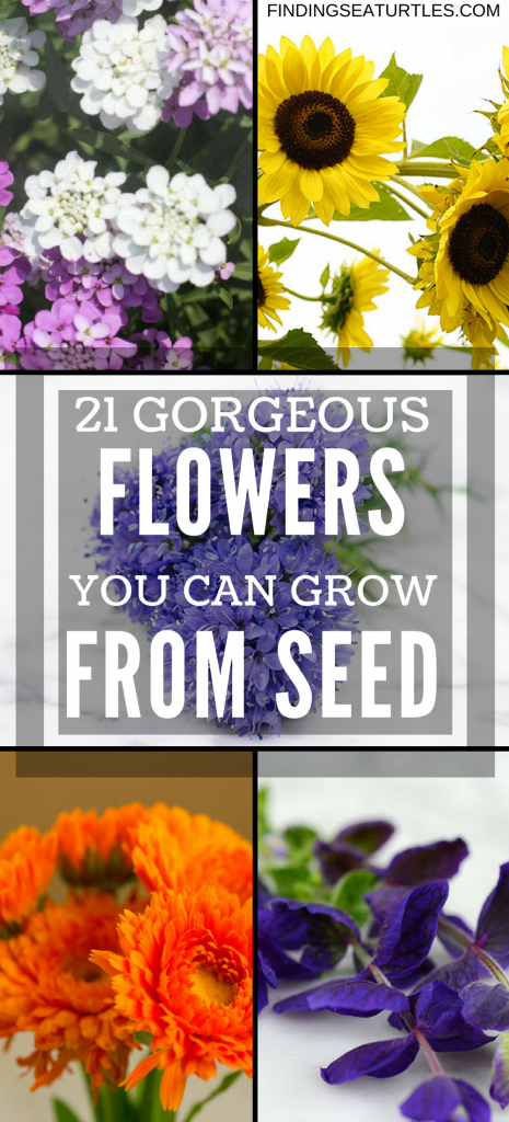 21 Gorgeous Garden Plants to Grow From Seeds #Gardening #FlowerBeds #GardenSeeds #DIY #DIYGarden