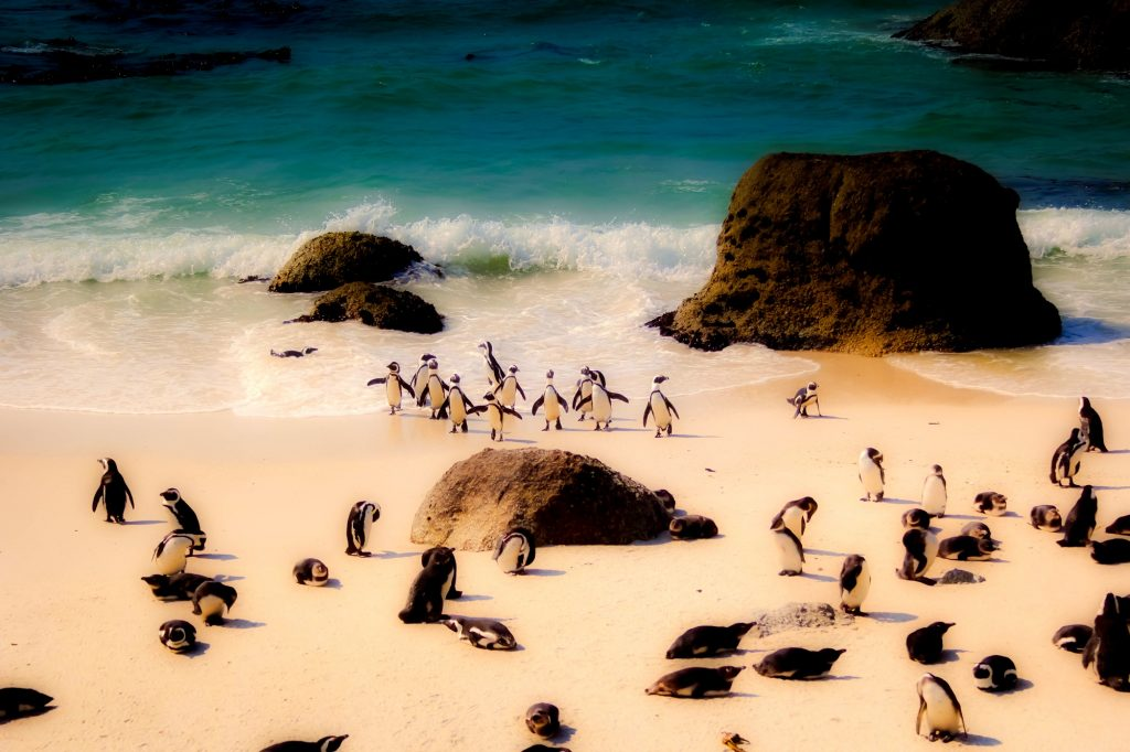 Sealife Spotlight: 40 Penguin Facts You Didn't Know #penguin #WorldPenguinDay #Sealife #Madagascar #Sealife