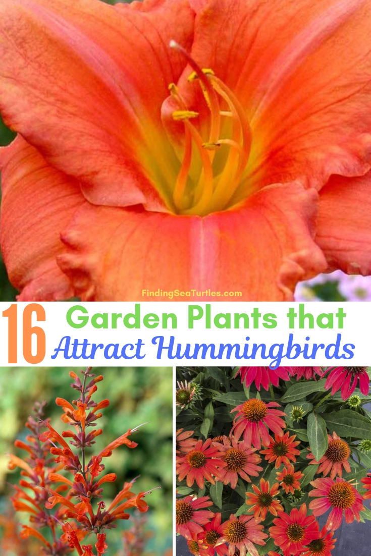16 Garden Plants That Attract Hummingbirds #Perennials #Garden #Gardening #Landscape #PerennialsForHummingbirds #Hummingbirds #Pollinators #GardenPollinators