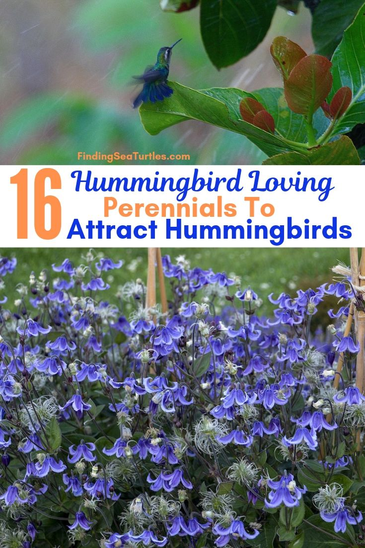 16 Hummingbird Loving Perennials To Attract Hummingbirds #Perennials #Garden #Gardening #Landscape #PerennialsForHummingbirds #Hummingbirds #Pollinators #GardenPollinators