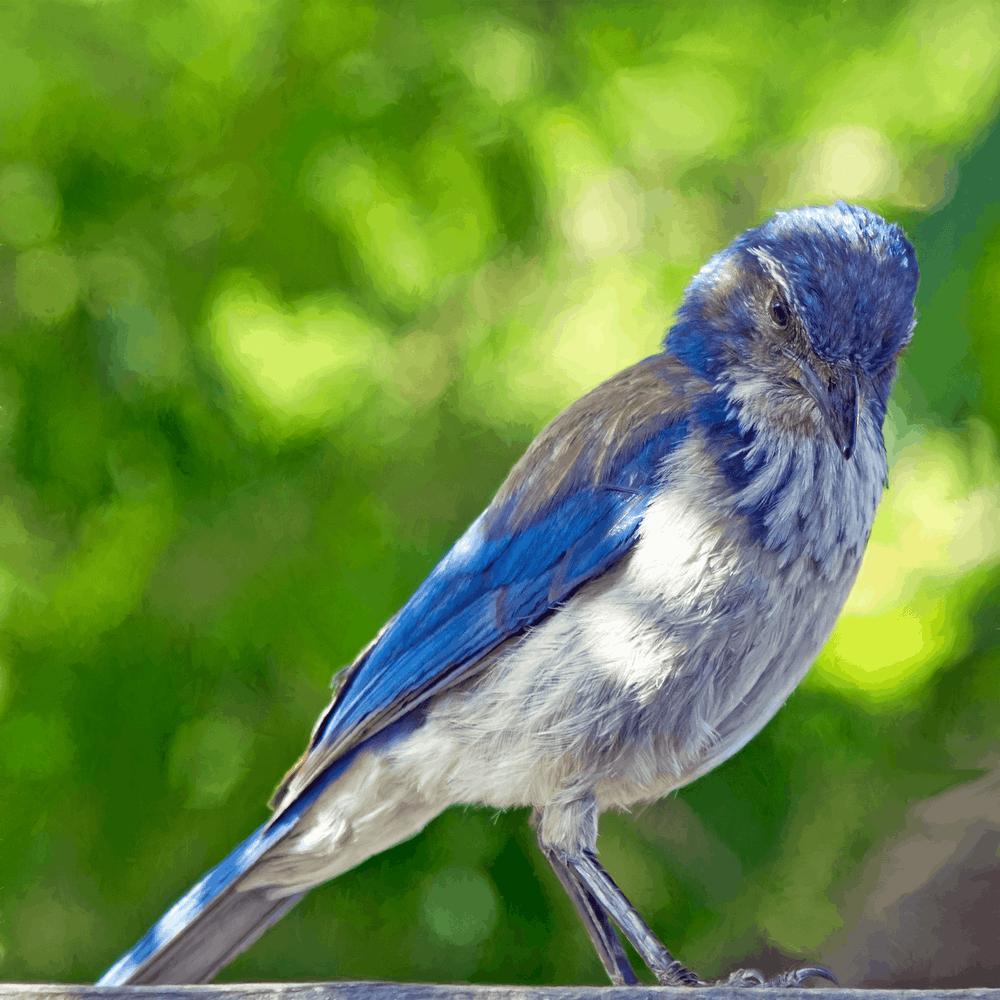 12 Budget Friendly Outdoor Summer Activities Bird Watching (photo Bill Williams) #LLBean #BudgetFriendly #OutdoorSummerActivities #SummerFun BirdWatching