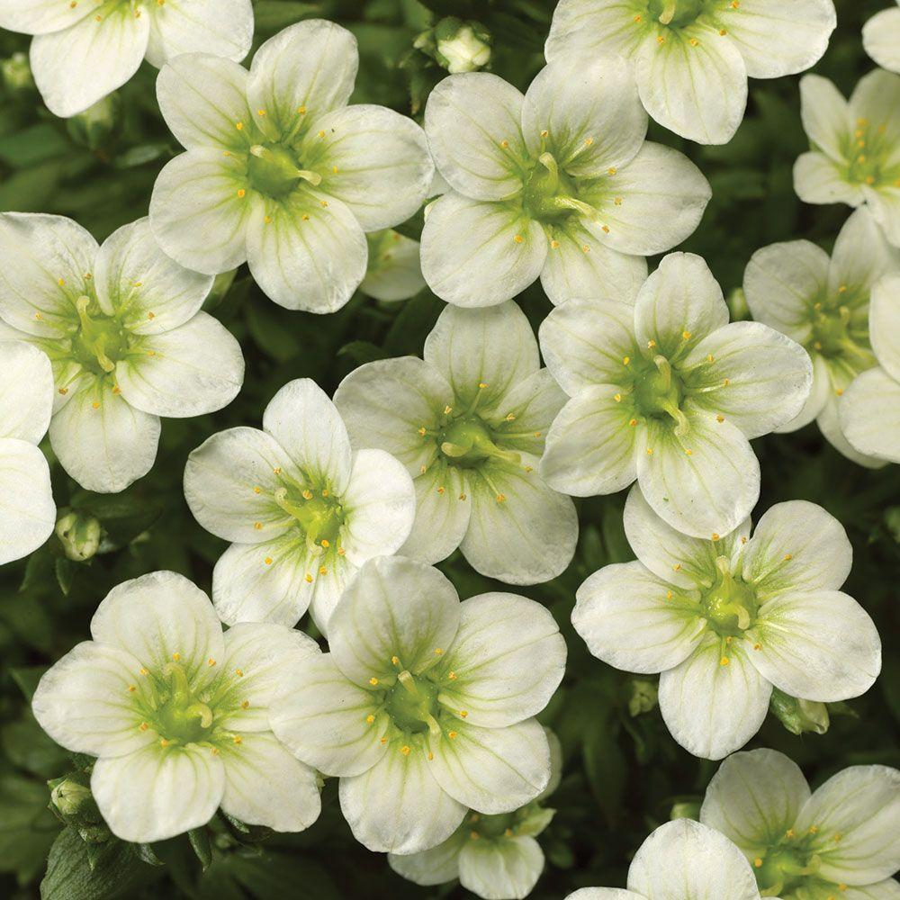 24 Spectacular Shade Garden Perennials