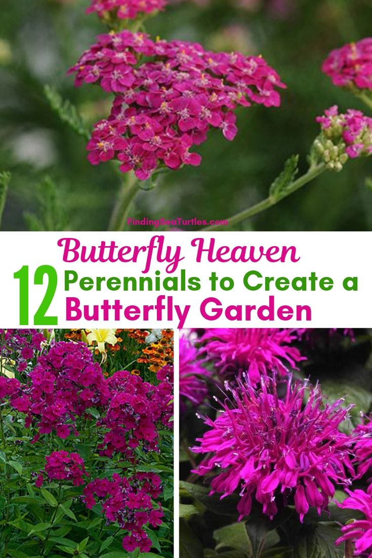 Butterfly Heaven 12 Perennials To Create A Butterfly Garden #Perennials #Garden #Gardening #Landscape #PerennialsForButterflies #Butterflies #Pollinators #GardenPollinators #ButterflyGarden