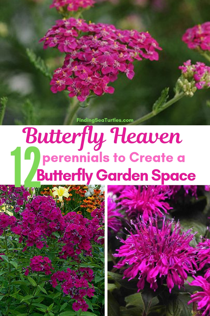 Butterfly Heaven 12 Perennials To Create A Butterfly Garden Space #Perennials #Garden #Gardening #Landscape #PerennialsForButterflies #Butterflies #Pollinators #GardenPollinators #ButterflyGarden