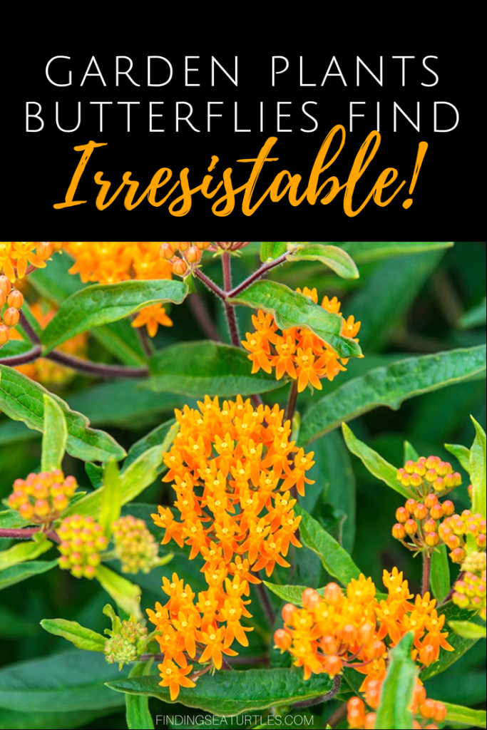 12 Perennials That Butterflies Find Irresistible #Gardening #ButterflyGarden #Organic #Butterflies #Perennials