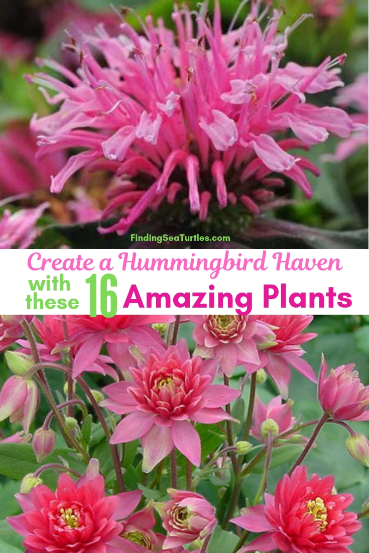 Create A Hummingbird Haven With These 16 Amazing Plants #Perennials #Garden #Gardening #Landscape #PerennialsForHummingbirds #Hummingbirds #Pollinators #GardenPollinators